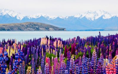 An American Psychiatrist's Adventure in New Zealand